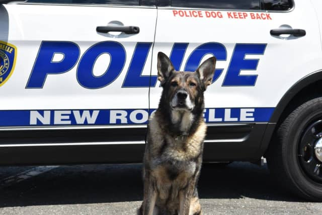 The New Rochelle K9 Unit was required following a bomb threat to the JCC of Mid-Westchester.