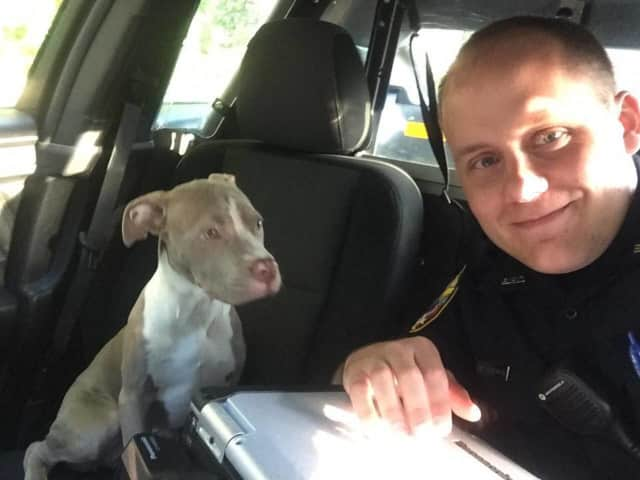 Bethel Police Officer Jared Robinson with his temporary partner, a lost puppy he found Friday.
