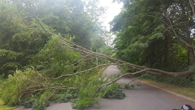 A tree is down on Honeysuckle Hill Road in Easton.