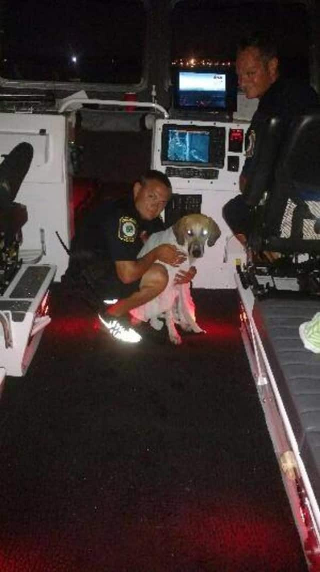 The Stratford Police Department Marine Unit came to the rescue of a dog who swam into the river during the fireworks show.