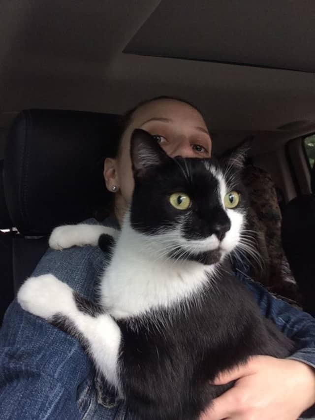 The Humane Society of Westchester at New Rochelle is seeking to find the owner of a cat that was found recently on the Hutchinson River Parkway in Pelham.