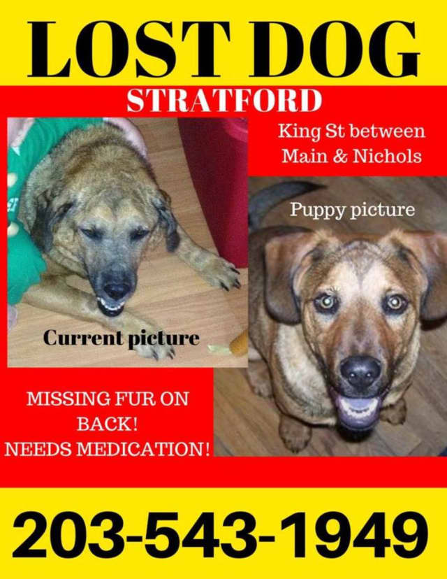 Missing dog in Stratford
