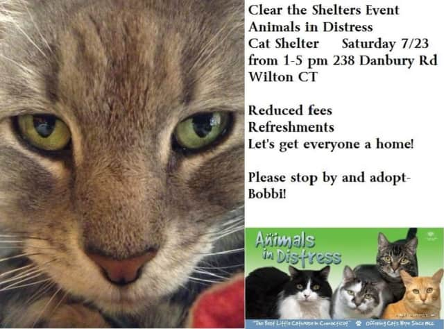 Help out cats at the Animals in Distress Shelter in Wilton on Saturday during the Clear the Shelters nationwide event.