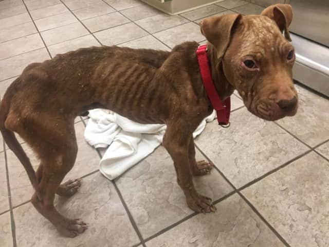 Pax was found tied to a porch in Paterson.