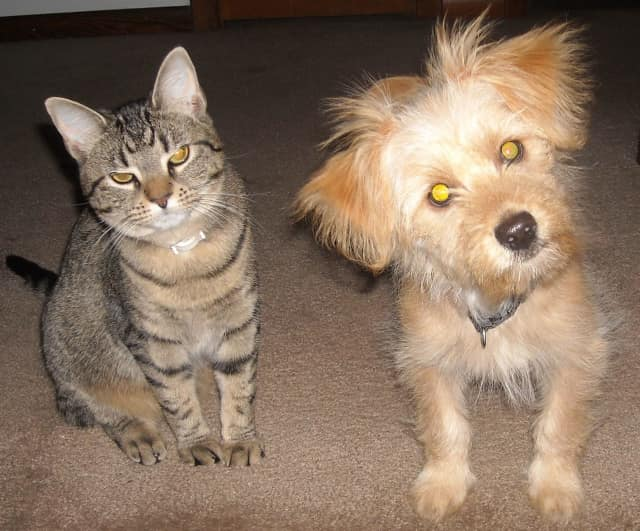 Dutchess County residents receive free rabies shots on Saturday, Sept. 9.