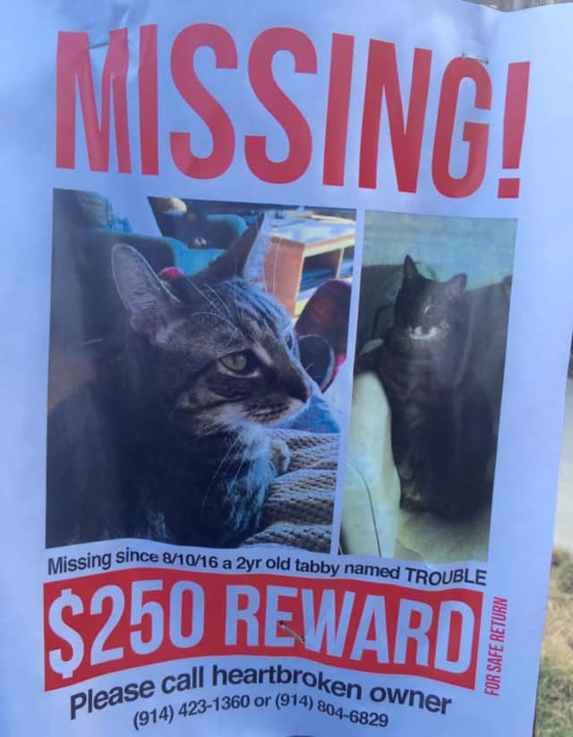 Trouble, a missing 2-year-old tabby cat, has been missing since Wednesday.