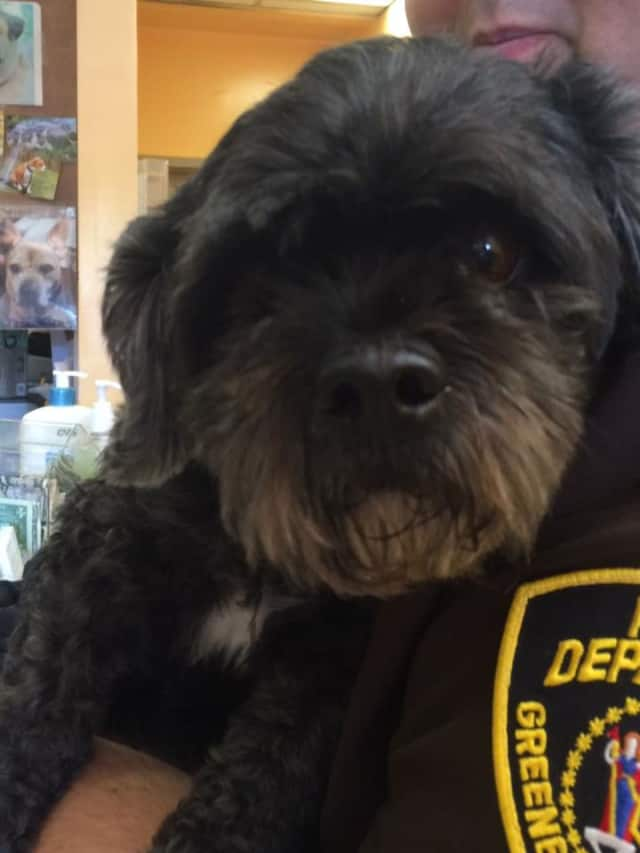 Authorities and pet advocates are searching for the owner of a dog found Friday in Elmsford.