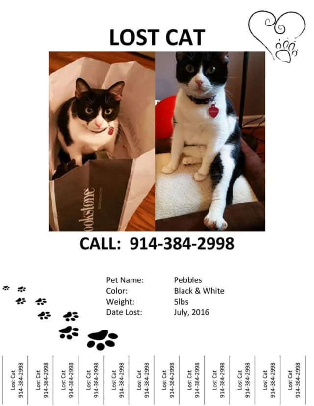Pebbles, a missing black and white cat, was last seen in the Somers/Yorktown Heights area in July.