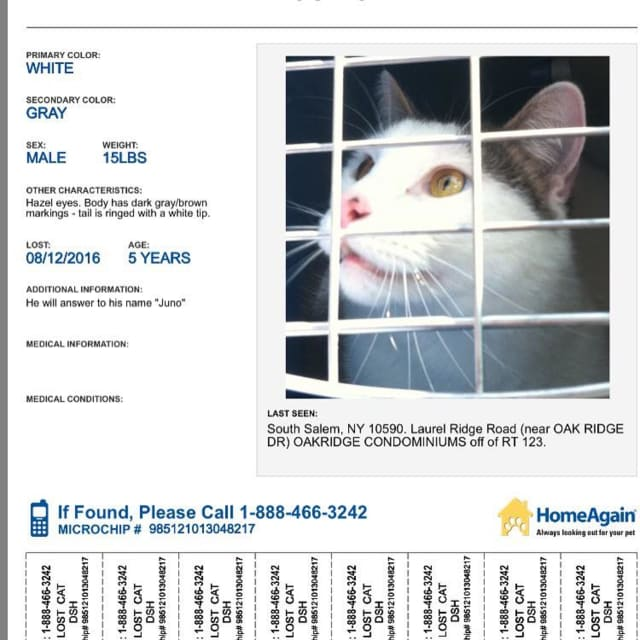 Juno, a 15-year-old male cat, has been missing since Aug. 12.