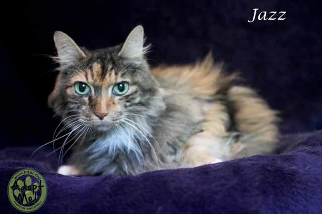 Jazz is the Hi Tor Animal Care Center's Pet of the Week.