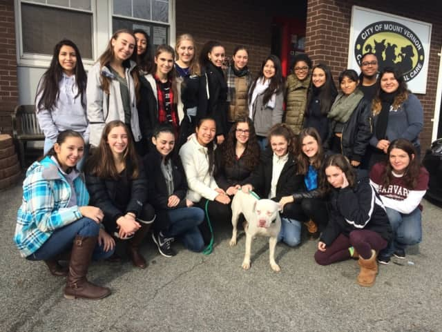 Sleepy Hollow High School students recently visited the Humane Society.