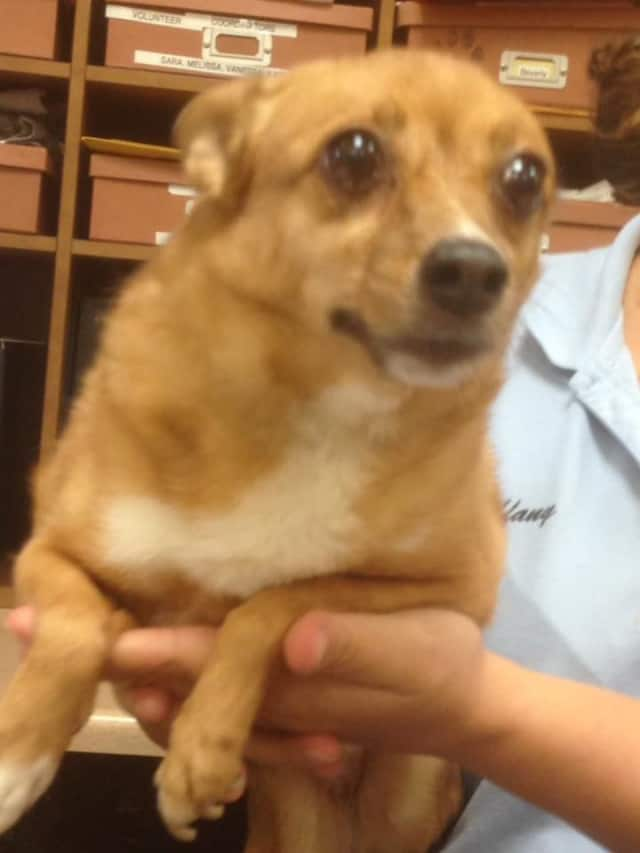 Animal advocates are searching for the owner of a dog found near the Ardsley/Hastings border.