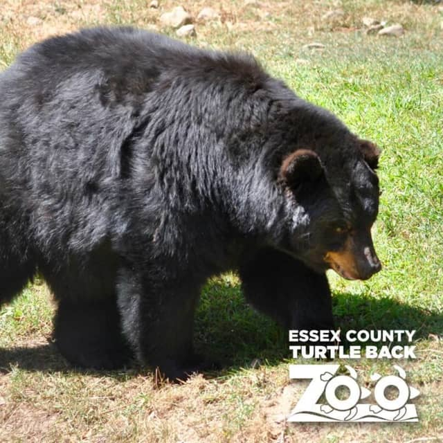 Thousands of people have signed a petition opposing a $16 million state grant to build a grizzly bear exhibit at Turtle Back Zoo in West Orange as well as $5 million in funds to repair some ballfields in Glen Ridge.