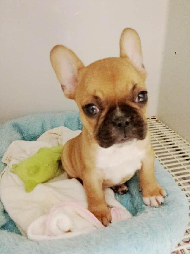 NY Puppy Club dog.
