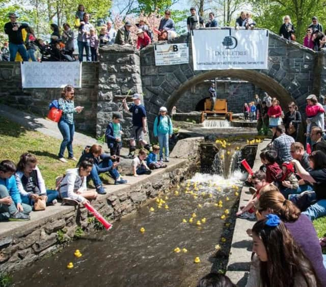 Tarrytown is hosting its annual rubber duck derby