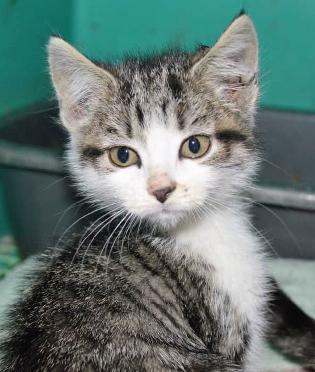 All Humane Animal Rescue, Inc. of Wanaque has dozens of dogs and cats available for adoption.