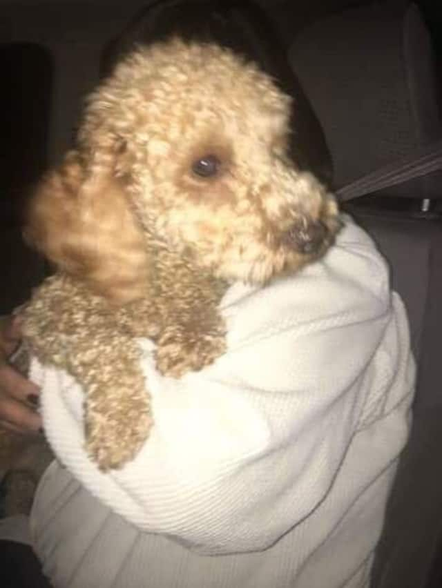 The Yonkers Animal Shelter is asking for the public's help identifying this dog.