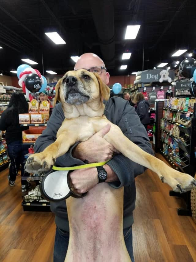 A man brings his do to the recent opening of a Pet Valu store in Pennsylvania. The chain will open its 300th store on Saturday in New Canaan.