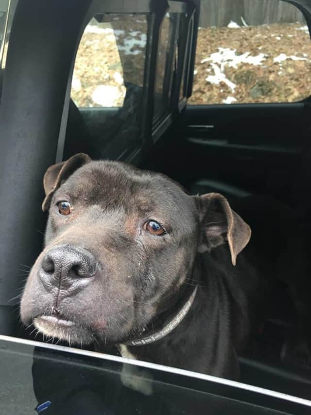 Hyde Park police found this dog shortly before noon on Monday, Dec. 26.