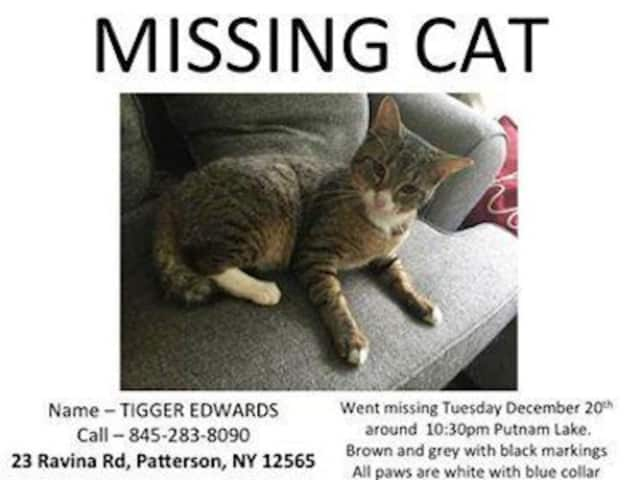 Tigger is missing from his Ravina Road home in Patterson.