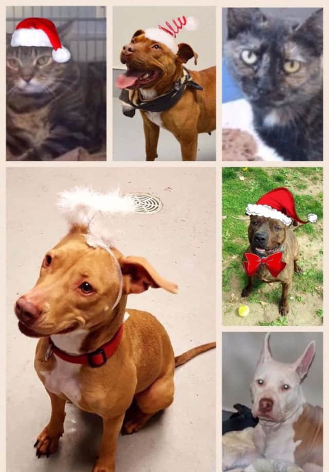 The Yonkers Animal Shelter will waive adoption fees for adults dogs and cats from Dec. 26 to Dec. 31.