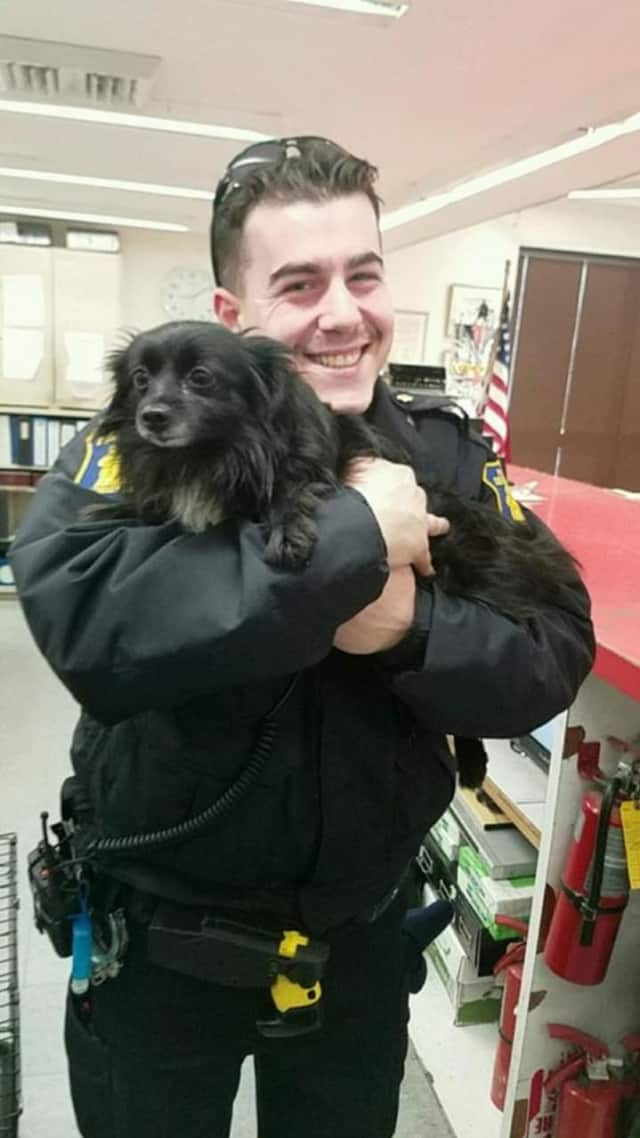 Yonkers police are seeking the owner of a dog found Friday near McLean Avenue.