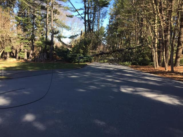 Wilton CERT was deployed Thursday to help detour traffic after a tree fell at the north end of Warncke Road and Catalpa Road near Wilton High School.