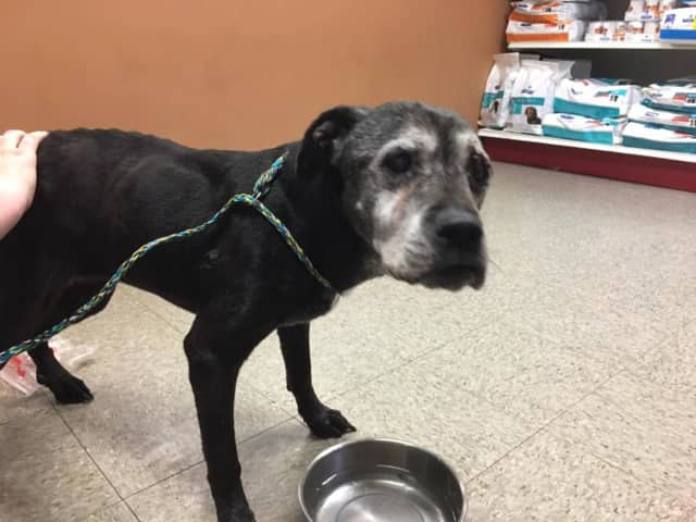 Lost Pets of the Hudson Valley is asking for the public's help in finding this lost dog's owner.