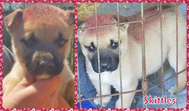Skittles was saved by Southern Paws Inc. of Ringwood.
