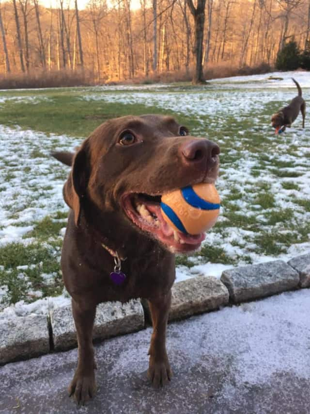 From high quality dog and cat food, to leashes, toys and more, Pet Pantry Warehouse is helping four legged residents in Westchester and Fairfield Counties look and feel their best.