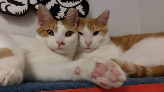 Frick and Frack are looking for a forever home.