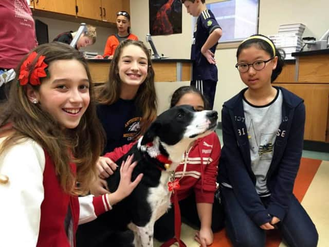 Lucy the therapy dog meets students at Anthony Wayne Middle School in Wayne.