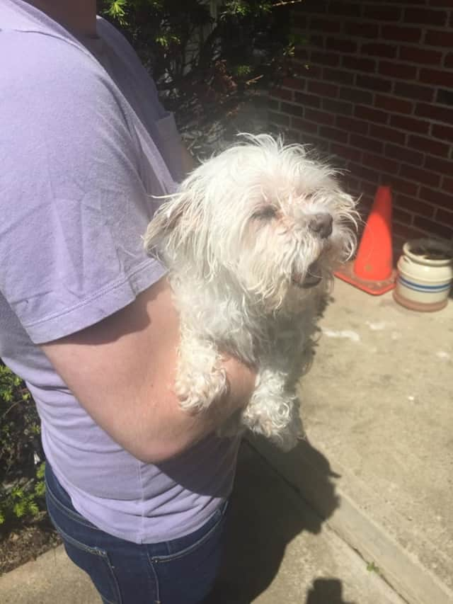 Lulu was rescued by Ramapo police after she fell into a sewer grate.
