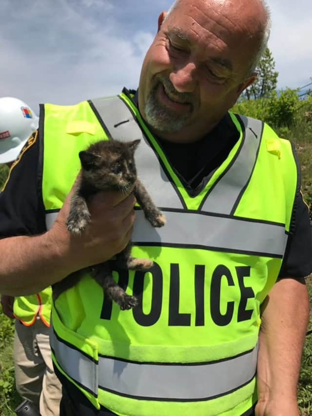 Veteran Norwalk Police Officer Russell Ouellette with a kitten he rescued.