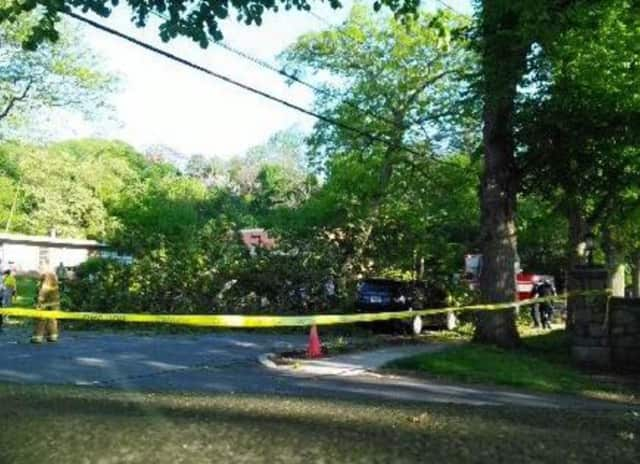 An 80-year-old man was killed when a tree fell on his car on North Broadway.