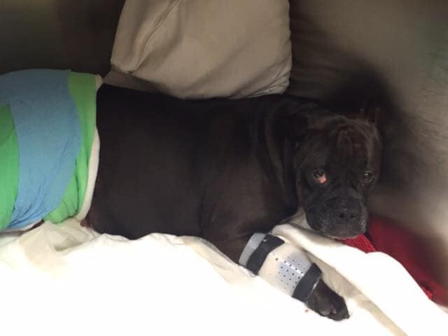 Maddie was found on I-95 in Westport after she was hit by a car.