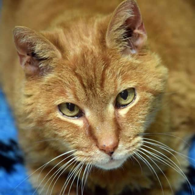 Golfball is waiting for his forever home at Norwalk PAWS.