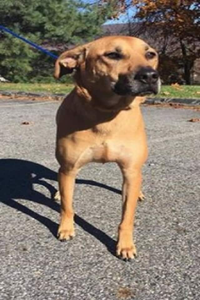 The Putnam Humane  Society is asking the public's help identifying this dog.