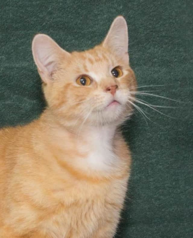 Taffy is looking for a home.