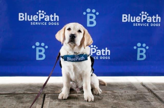 "Future BluePath autism service dog ""Puppy #24"" was on hand at the walkathon at Franklin D. Roosevelt State Park in Yorktown Heights. Photograph by Samantha Okazaki."