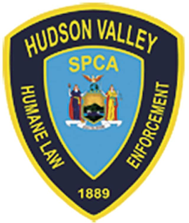 A Wallkill man was charged with beating a dog by the Hudson VAlley Humane Law Enforcement.