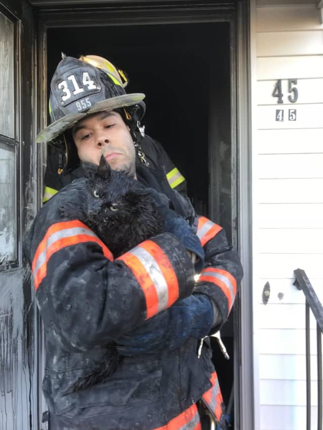 A cat was found under the bed following the Yonkers fire.