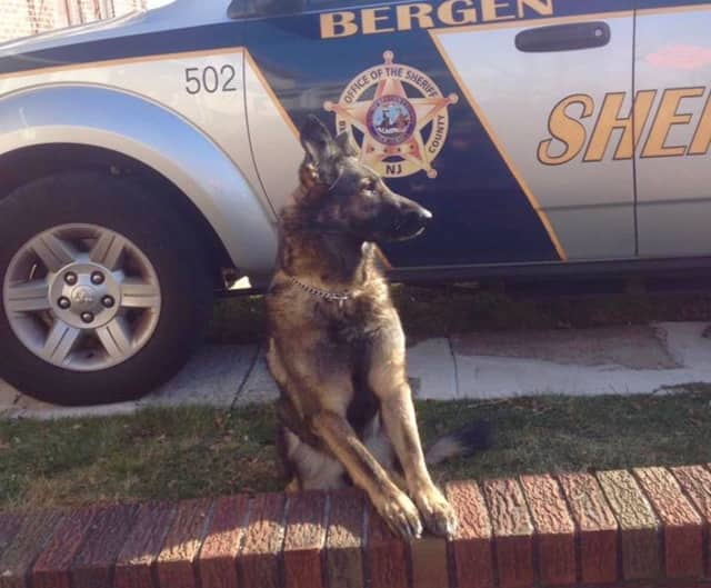 The BCSO K-9 unit is grieving for Brinley.