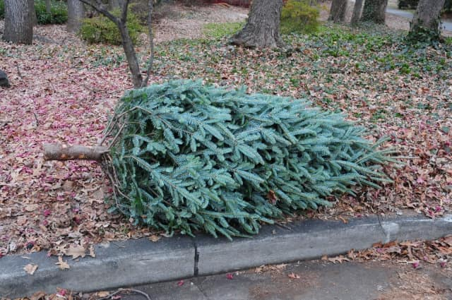 The City Highway Department will pick up live Christmas trees beginning Monday Jan. 2.