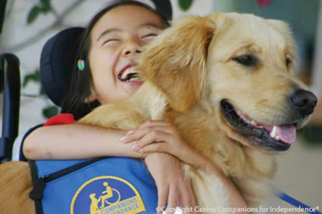 Service dogs from Canine Companions for Independence will be part of a program Oct. 17 at the Scarsdale Public Library.