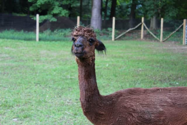 An alpaca farm in Pleasant Valley will have an open house.
