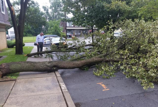 Saddle Brook Mayor Robert White inspects downed-tree damage that closed Williams Street. DPW crews were at work.