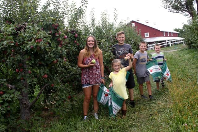 Apple picking at Pennings Orchard in Warwick.