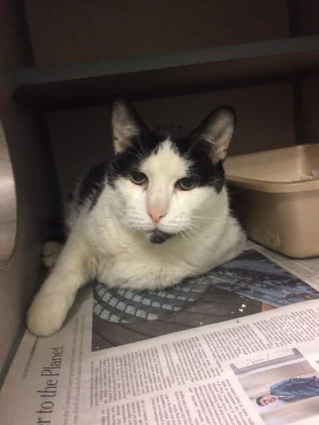 This cat was found on Central Avenue in Hartsdale.