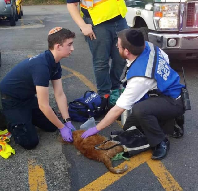 Spring Valley Ambulance Corps rescue personnel work to save a cat that was trapped in the fire.